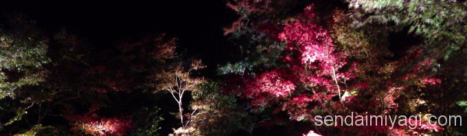松島紅葉ライトアップ・瑞巌寺灯道