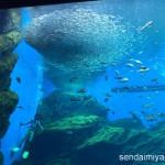 2015/9/20 仙台うみの杜水族館 写真