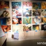 2015/11/1 仙台うみの杜水族館 写真