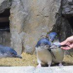 2016/5/30 仙台うみの杜水族館 写真
