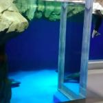 仙台うみの杜水族館 バイカルアザラシ動画