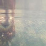 仙台うみの杜水族館 アメリカビーバーの泳ぎ方 動画