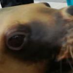 仙台うみの杜水族館 オタリア フレンドリータイム 動画