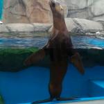 仙台うみの杜水族館 オタリア 動画