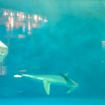 仙台うみの杜水族館 ヨシキリザメの餌付け動画