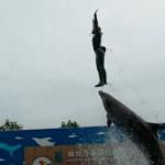 仙台うみの杜水族館 イルカショー エアリフト 動画