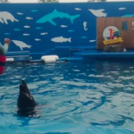 仙台うみの杜水族館ドルフィン・スプラッシュ 動画