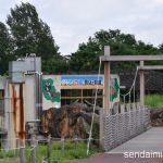 2016/7/20 仙台市八木山動物公園 写真