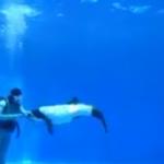 仙台うみの杜水族館 イロワケイルカの公開パフォーマンス 動画