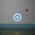 仙台うみの杜水族館 テッポウウオ 動画