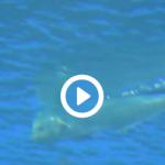 仙台うみの杜水族館 シイラ 動画
