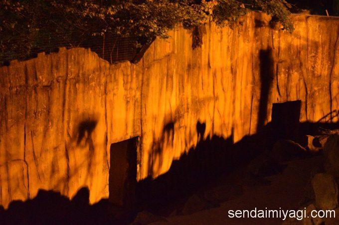 8/20まで。仙台市八木山動物公園 夜間開園「夜までZOOっと動物探検」
